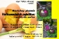 workshop_pletenia_zajacikov